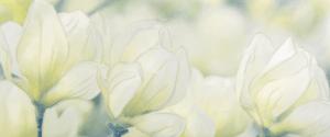 Rapsodia olive decor 01 250*600 мм